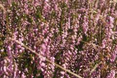 struikhei#(20210815)a flora