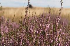 struikhei#(20210815)b flora