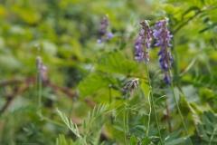 wikke#(20210815) flora