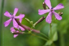 pekbloem#(20210829) flora