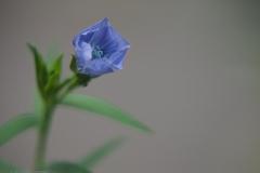 vlas#(20210911) flora