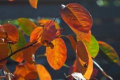 blad#(20190920) flora