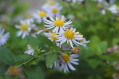 bloem#1819