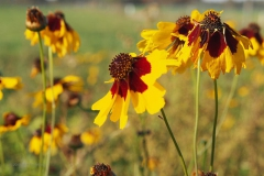 bloem#0711