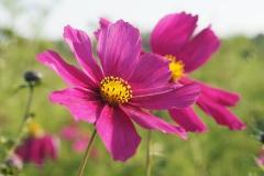 bloem#1606