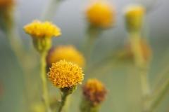 bloem#0714