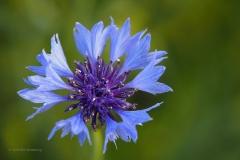 bloem#0207