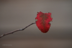 blad#(20201110) flora