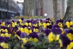 bloem#1619a