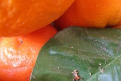 vrucht#(20120522) food