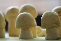 paddenstoel#(20200414) food