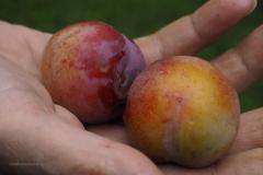 vrucht#26 (20200714) food