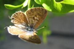 vlinder#21