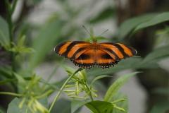 vlinder#18