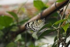 vlinder#07