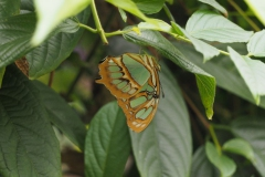vlinder#10