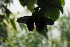 vlinder#09