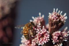 bij#(20210319) insecten