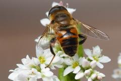 bij#(20210807) insecten
