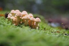 paddenstoel#(20190927)d