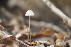 paddenstoel#(20190927)a
