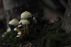 paddenstoel#(20201016)e