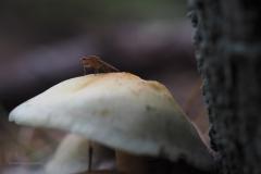 paddenstoel#(20201016)d