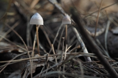 paddenstoel#(20201016)c