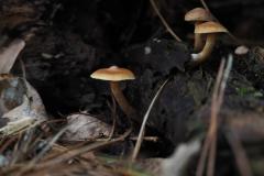 paddenstoel#(20201016)a