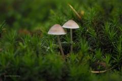 paddenstoel#(20201018)h