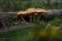 paddenstoel#(20201018)g