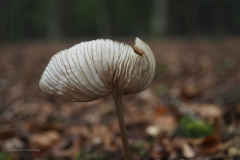 paddenstoel#(20201018)a