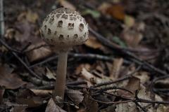 paddenstoel#(20201018)d