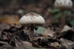 paddenstoel#(20201018)e