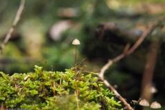 paddenstoel#(20211022)