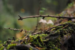 paddenstoel#20211022)