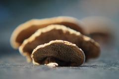 paddenstoel#(20191026)c