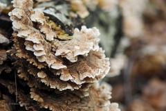 paddenstoel#(20191027)a