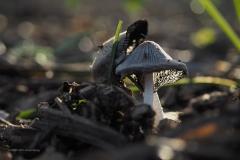 paddenstoel#(20201107)
