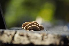 paddenstoel#(20191026)a