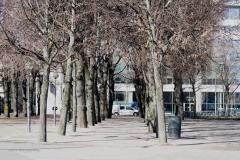 bomen#(20190318) straatbeeld