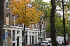 straat#(20191011)b straten