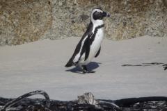 pinguin#01