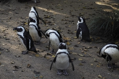 pinguin#02