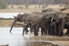 olifant#(20141104)a