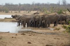 olifant#(20141104)b