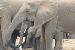 olifant#(20141104)c