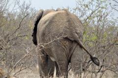 olifant#(20141104)e