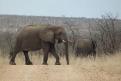 olifant#(20141104)f