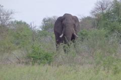 olifant#(20141106)b